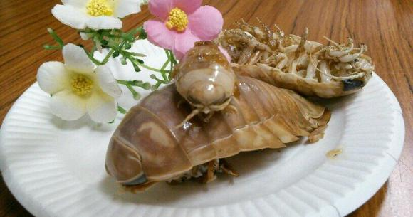 Giant Isopod.jpg